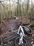 Steyning trail