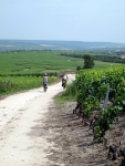 Vineyards near Epernay