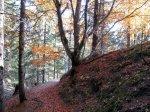 Leafy trail
