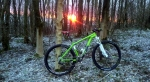 Steyning Woods