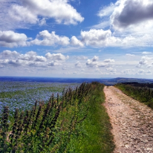 South Downs Way Bignor looking East
